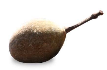 organic_burst_baobab
